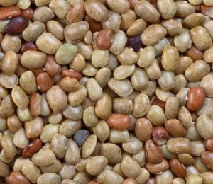 Images of Horse Gram