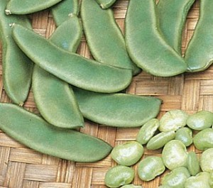 Images of Lima Bean