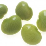 Pictures of Lima Bean