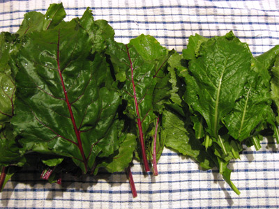 Turnip Greens Image