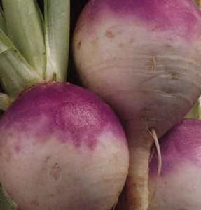 Photos of Turnip