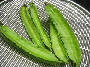 Photos of Winged Bean