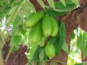 Pictures of Bilimbi