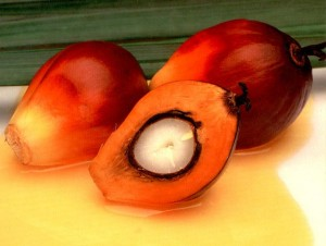 Palm Oil Fruit Image