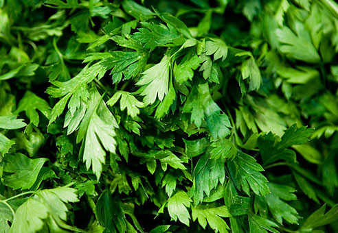 Images of Parsley