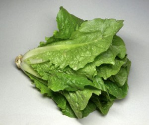 Pictures of Romaine Lettuce