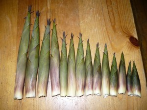 Bamboo Shoots Pictures