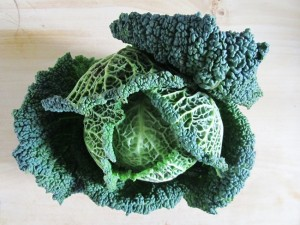 Pictures of Savoy Cabbage