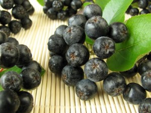 Aronia Berry Images