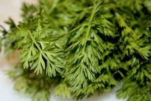 Carrot Greens Images