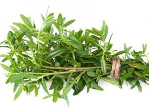 Summer Savory Pictures