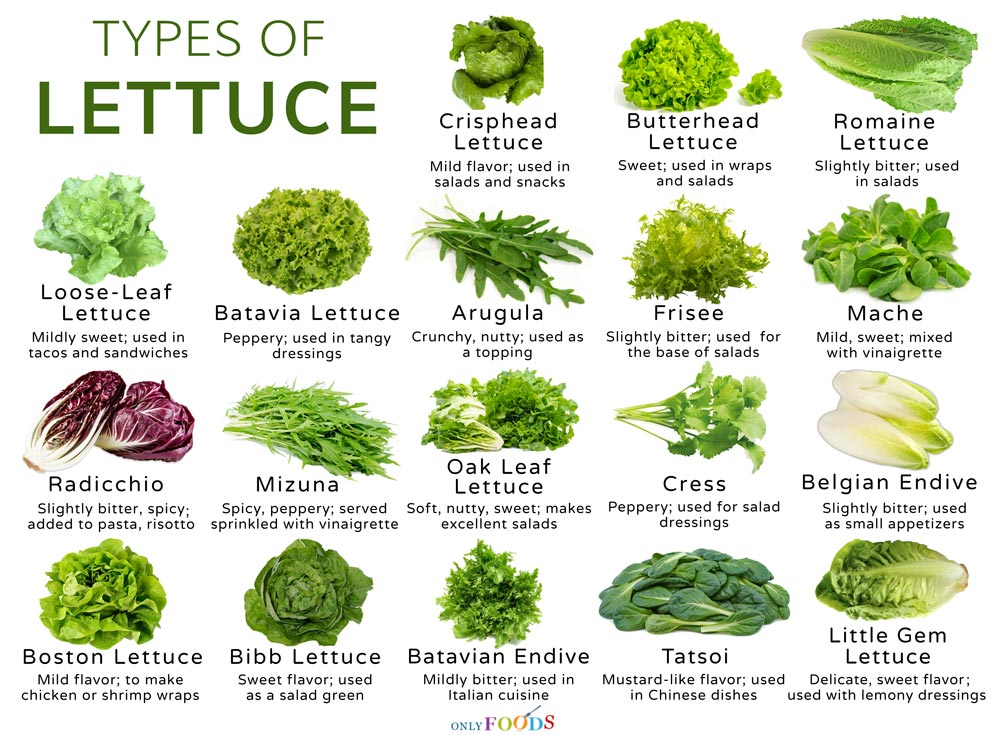 18 Different Types Of Lettuce With Pictures